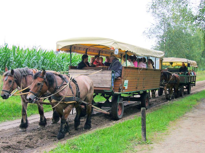Lüneburger Heide - Planwagen