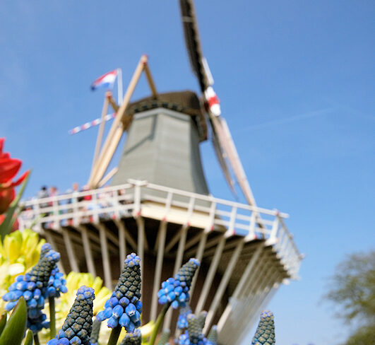 Niederlande Windmühle