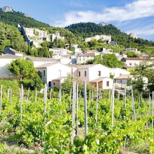 Provence - Weinberg