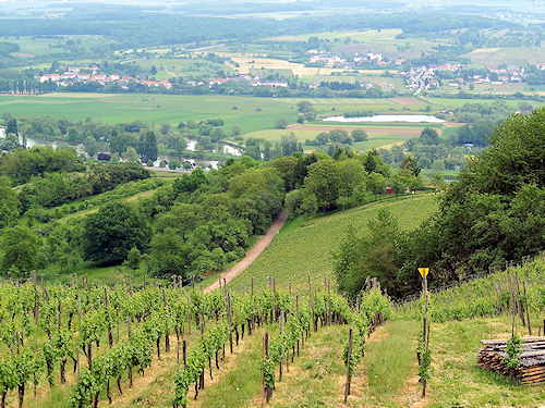 Luxemburg - Weinberg