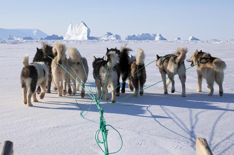 Mit dem Hundeschlitten durch Grönland