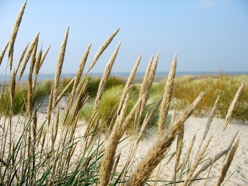 Nordseeinsel Föhr - Strand