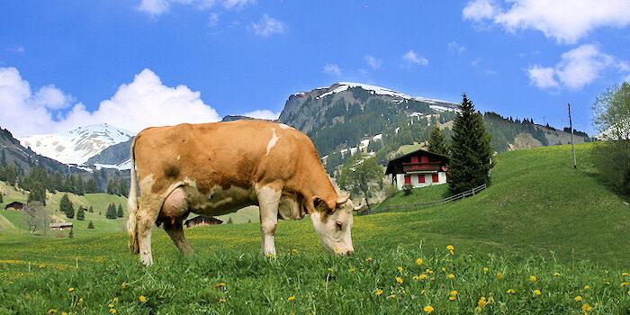 Urlaub in den Bergen - Schweiz