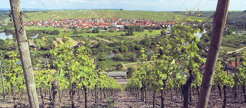Weinanbaugebiete - Fränkisches Weinland