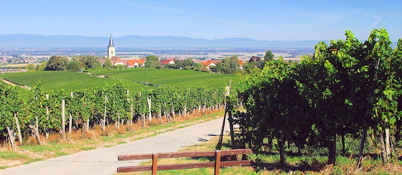 Weinanbaugebiete - Schwarzwald Baden