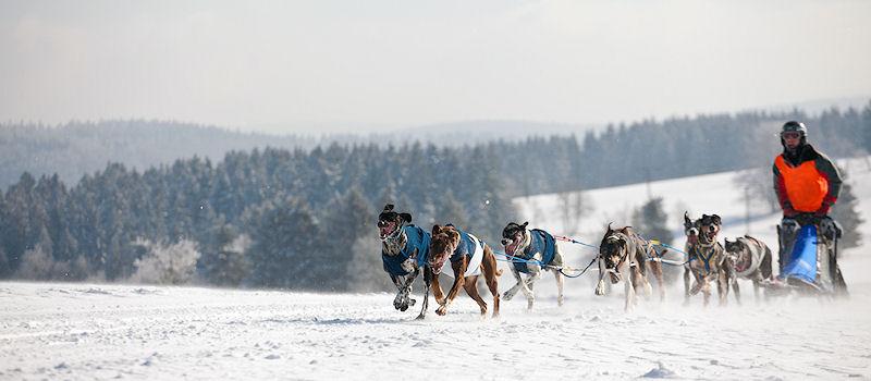 Wintersport im Harz - Hundeschlitten