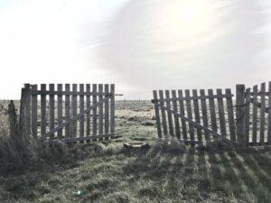 Hallig Langeness - Nordsee - Wattenmeer