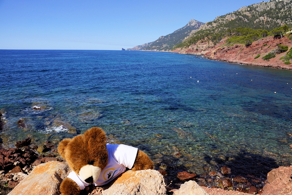 Der Urlaubär auf Mallorca am Port des Canonge