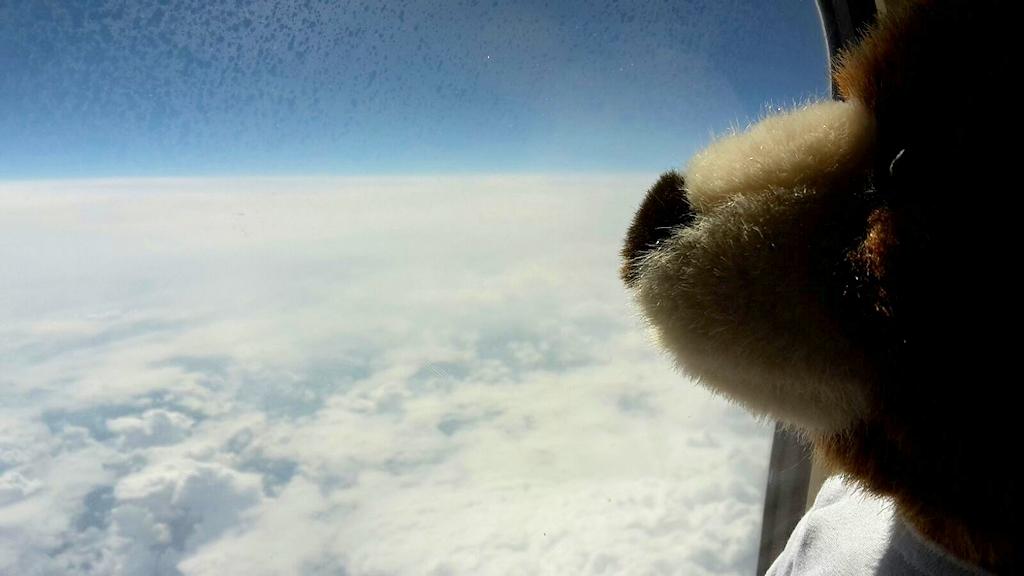 Der Urlaubär über den Wolken
