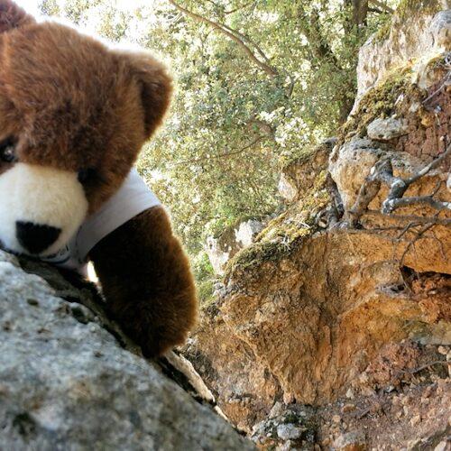 Der Urlaubär in den Bergen von Mallorca