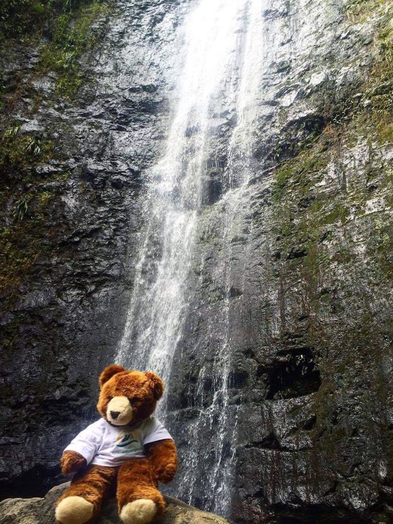 Der Urlaubär am Wasserfall Manoa Falls