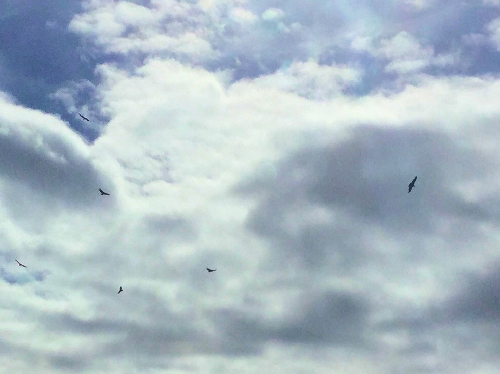 Kondore am Himmel