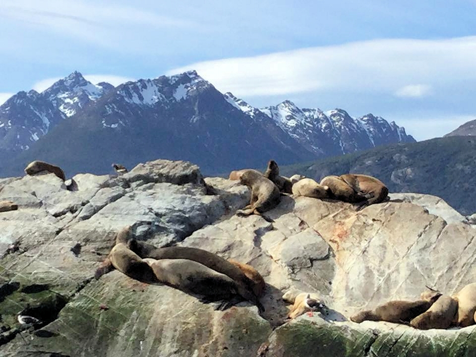 Seelöwen in der Sonne