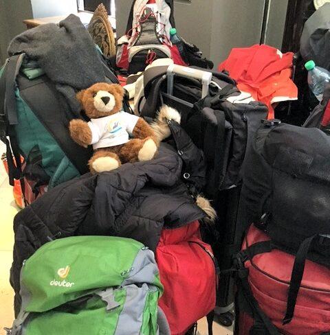Der Urlaubär sitzt auf gepackten Koffern ...