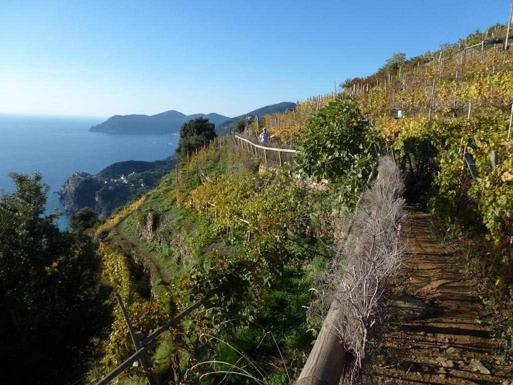 Wanderweg zwischen Manarola und Corniglia