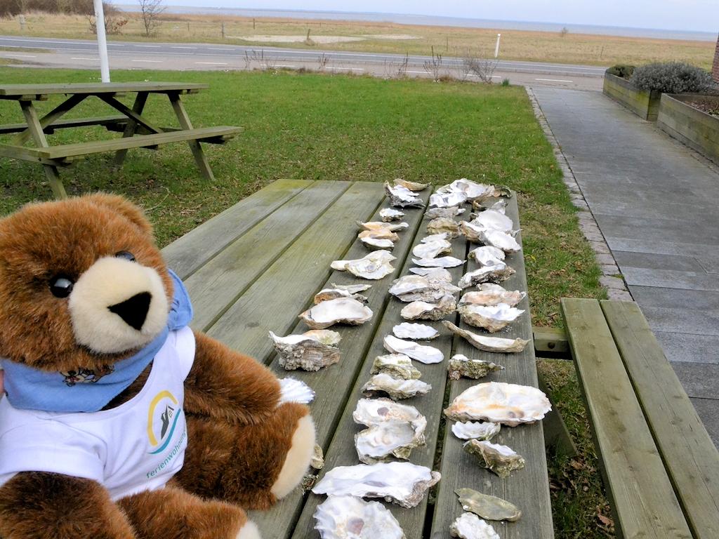 Der Urlaubär ist stolz auf die Austern, die er im Wattenmeer gefunden hat