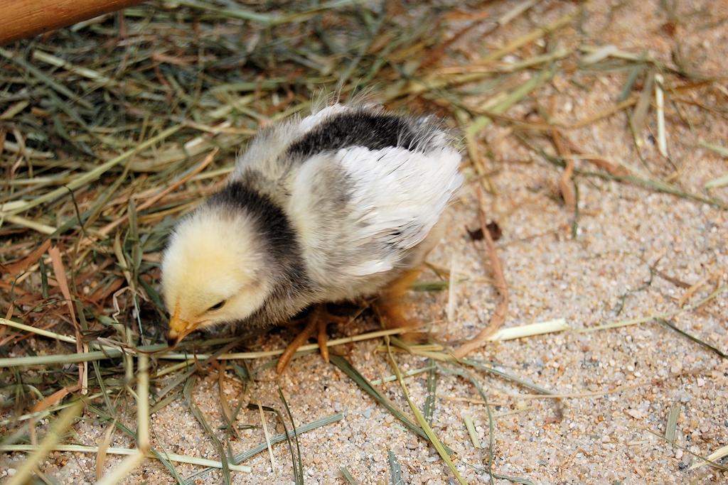 Die Jungtiere im Tierpark Görlitz können gestreichelt und gefüttert werden