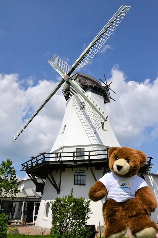 Der Urlaubär an der Windmühle Westerholz