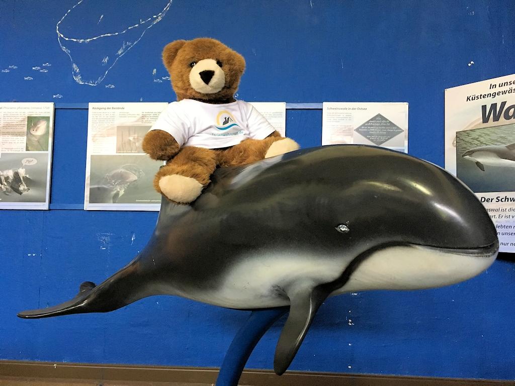 Der Urlaubär hat einen Schweinswal entdeckt