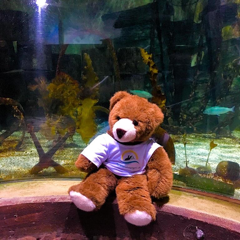 Im Sylt Aquarium