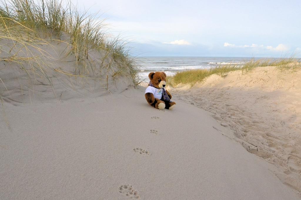 Dänemark im Herbst - Der Urlaubär in den Dünen bei Henne Strand