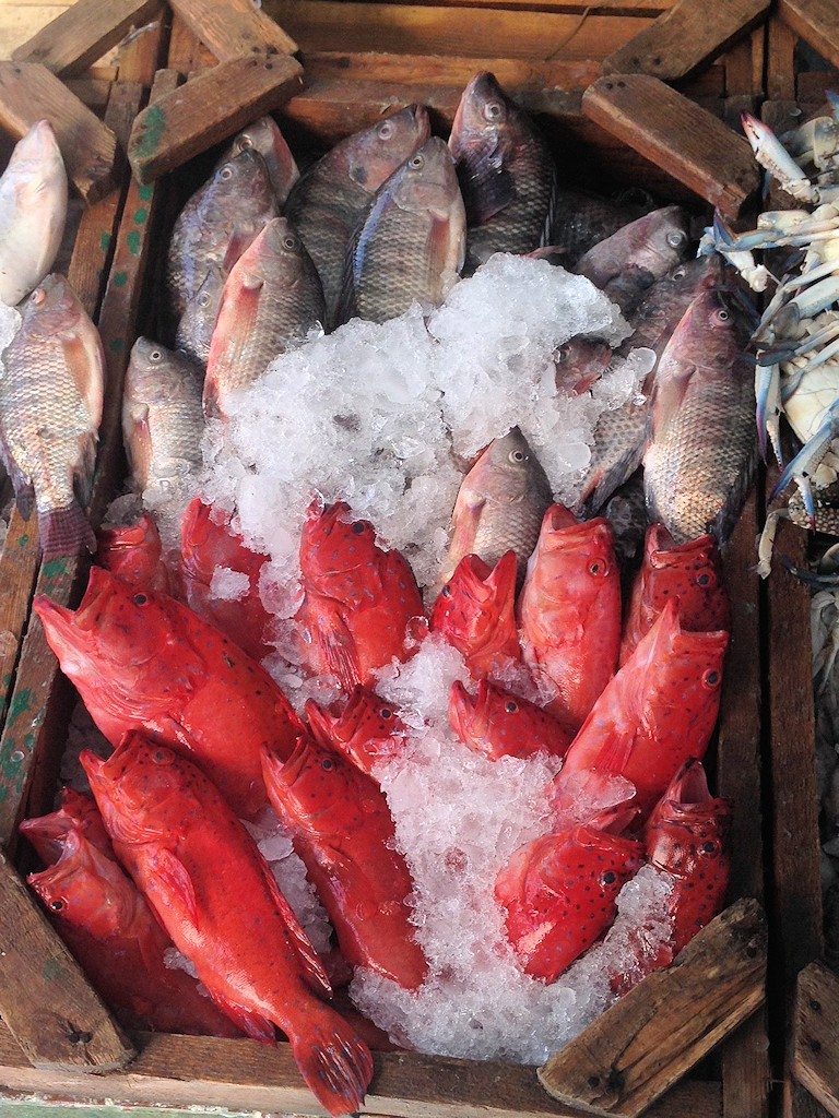 Auf dem Fischmarkt