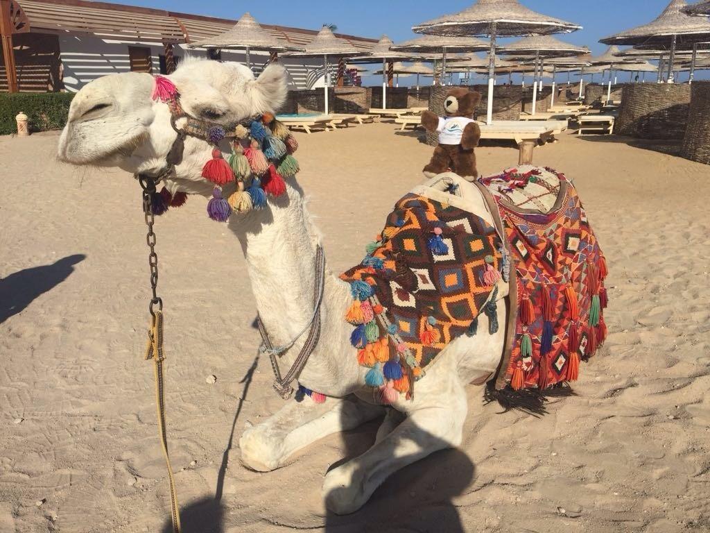 Kamelritt in Ägypten