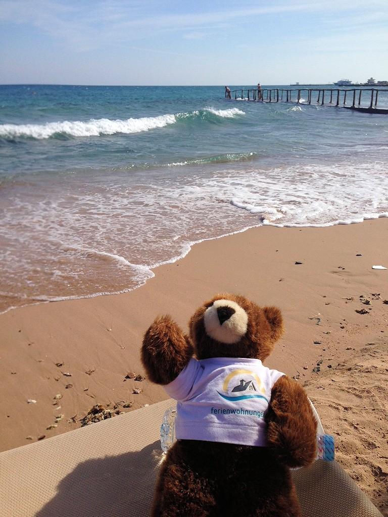 Der Urlaubär am Strand des Roten Meeres