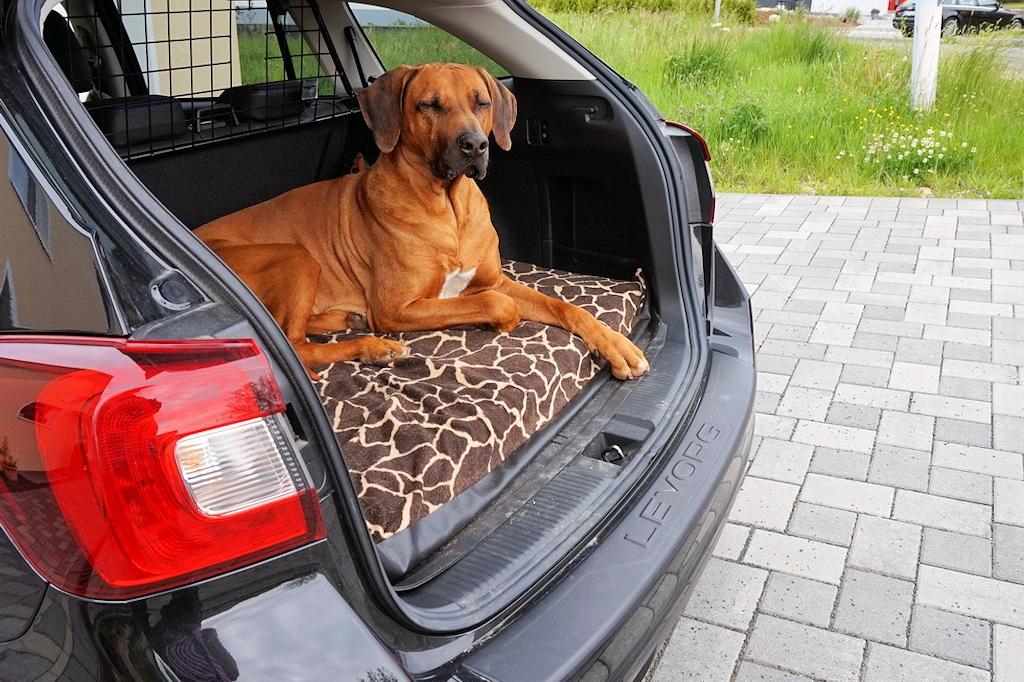 Eine sichere Unterbringung im Auto ist wichtig