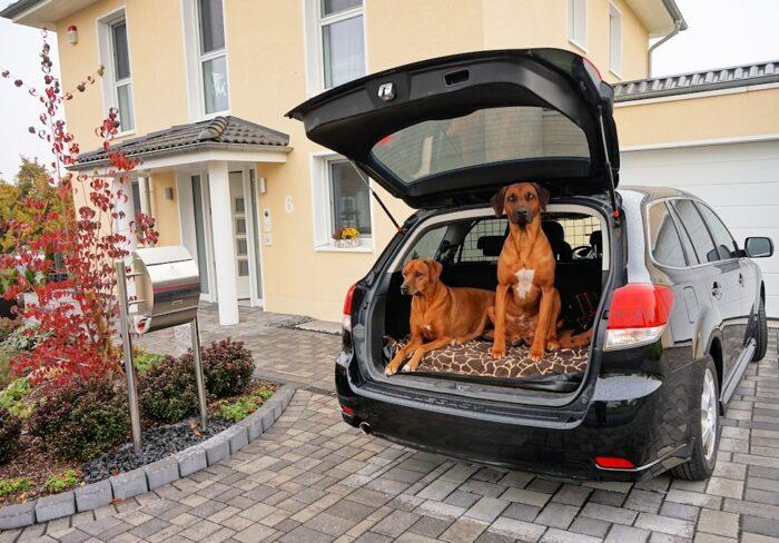 8 Tipps fuer Autoreisen mit Hund(en)