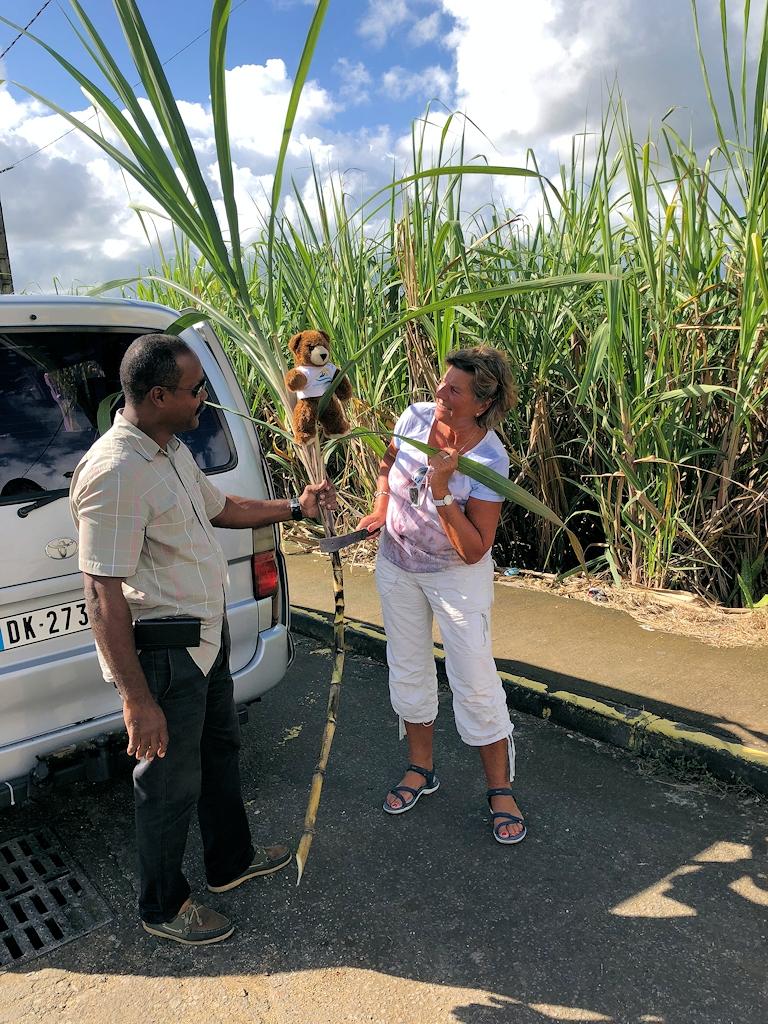 Barbara und der Urlaubär In den Zuckerrohrfeldern auf Guadeloupe