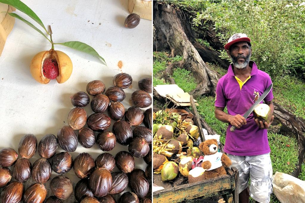 Muskatnuss und Kokosnuss auf Grenada