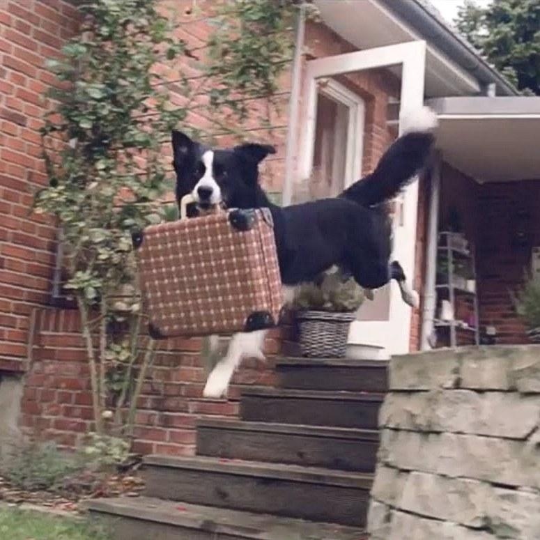 Hunde-Fotowettbewerb #meinhundeurlaub Challenge