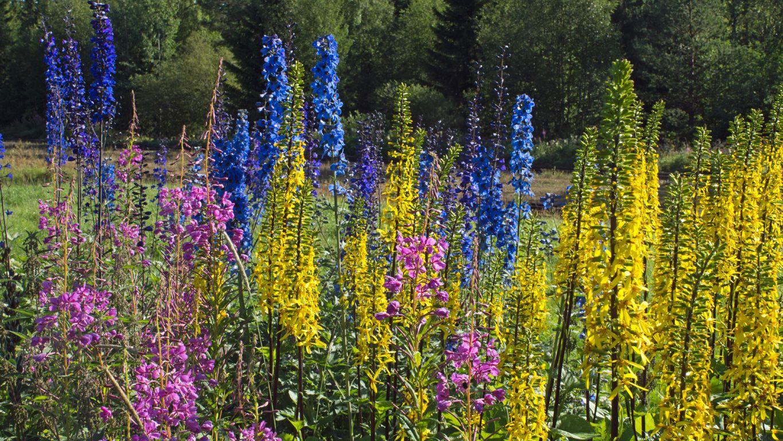 Mit dem wohnmobil in Südschweden - Blumenpracht