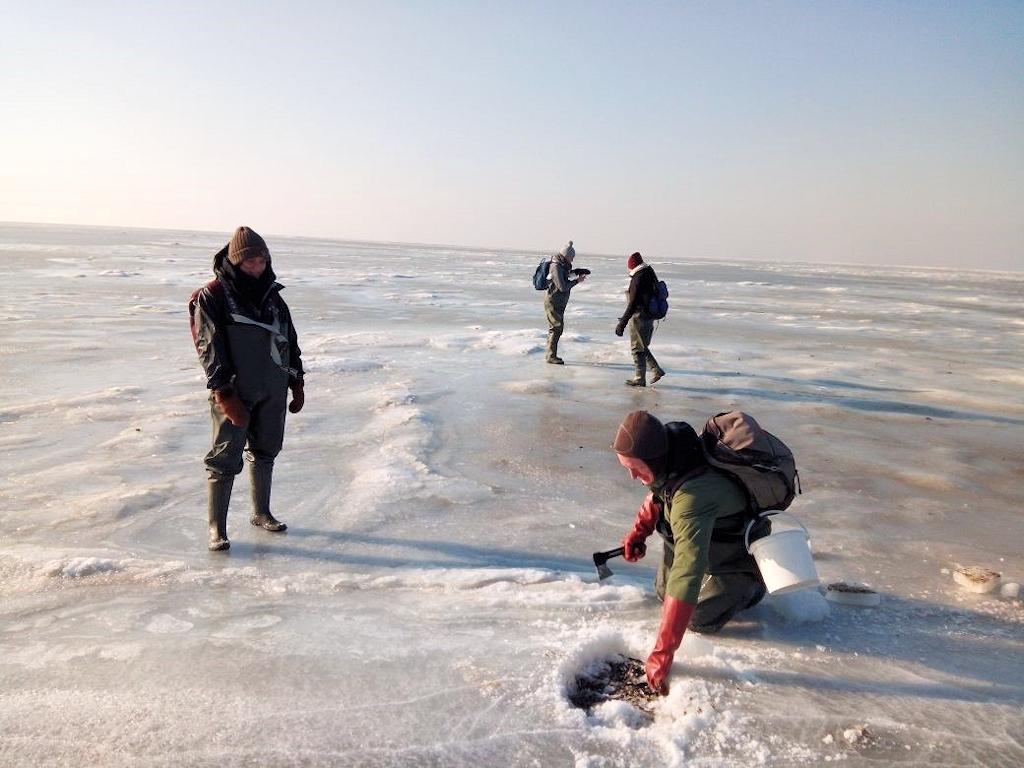 Das Wattenmeer im Winter