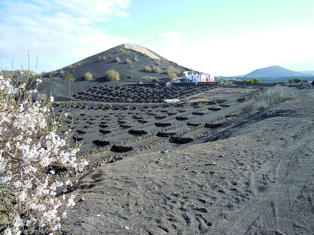 Weinanbaugebiet La Geria