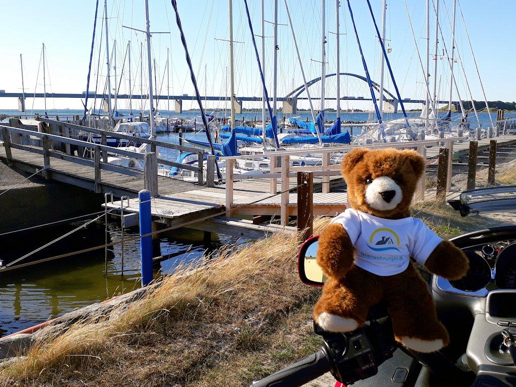 Urlaubär mit Fehmarnsundbrücke im Hintergrund
