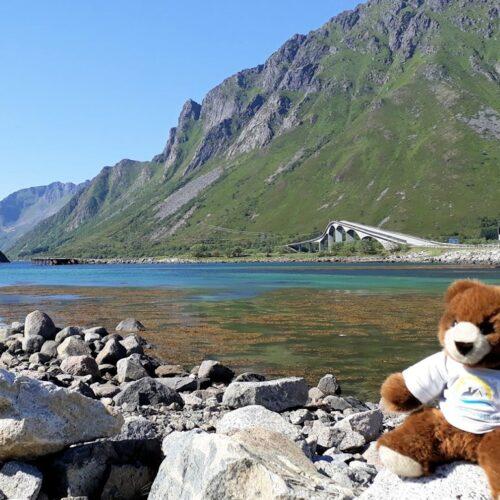 Der Urlaubär an der Südküste der Lofoten