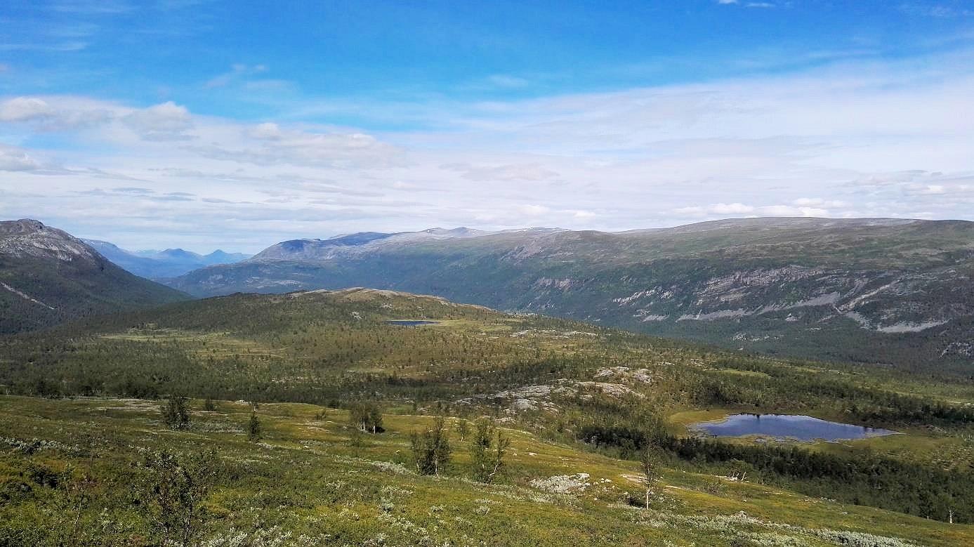 Im norwegischen Reisadalen wächst wieder dichter Wald