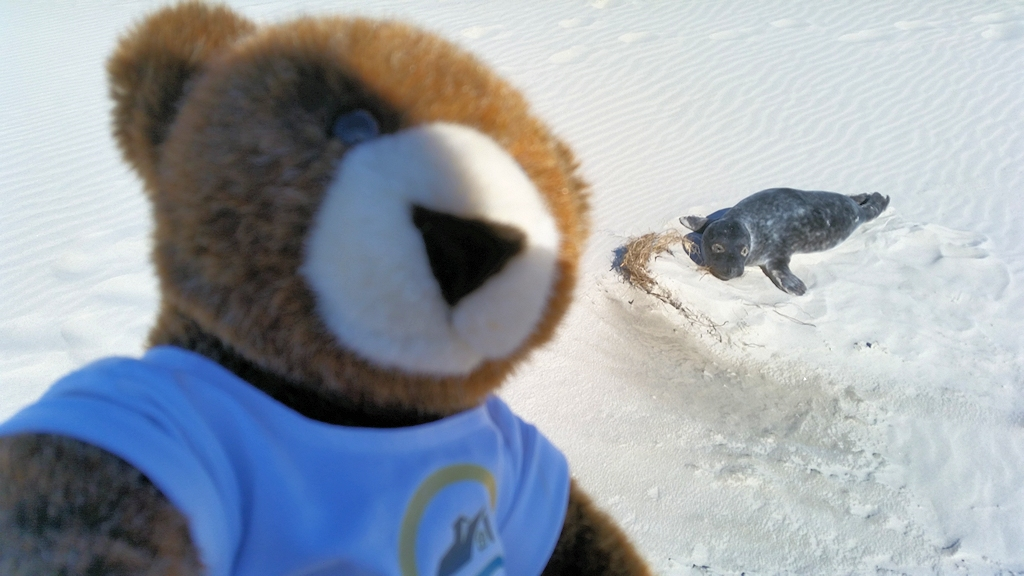 Urlaubär und Seehund an der Nordspitze Grenen