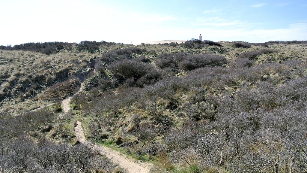 Wanderweg zum Leuchtturm auf der Rubjerg Knude