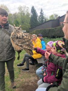 Greifvogelshow im Harz