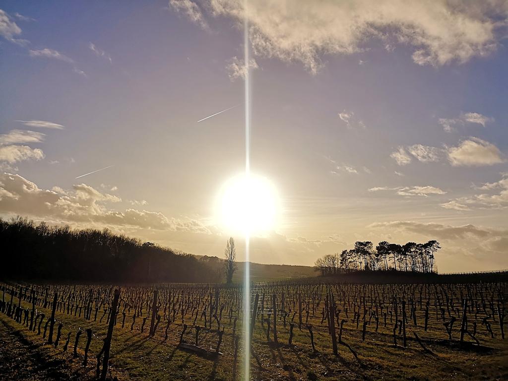 Frankreich zu Fuß - Weinanbaugebiet südlich von Bordeaux