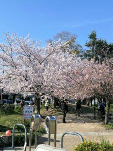 Kirschblüte in Kyōto