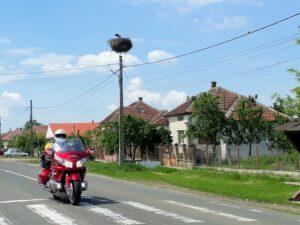 In jedem Dorf gibt es etliche Storchennester