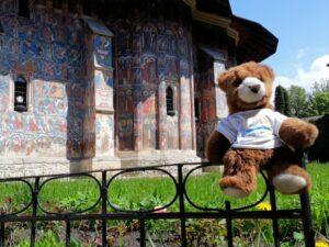 Bär im Kloster Moldovita