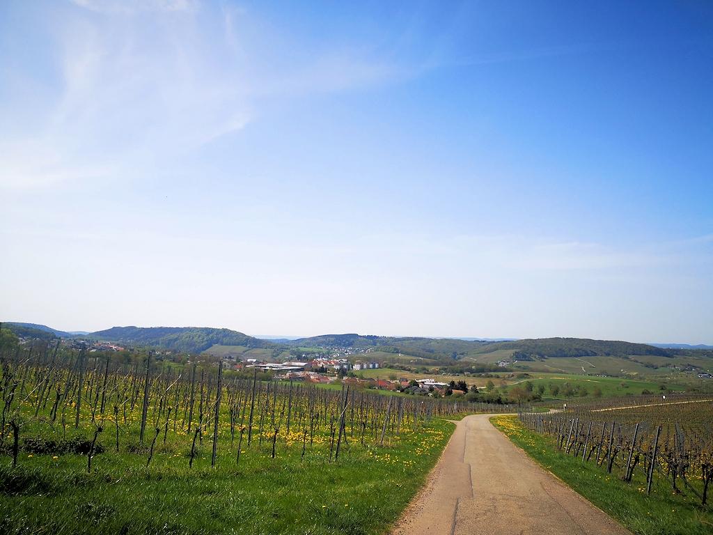 Deutschland zu Fuß - In den Weinbergen nahe der Mosel