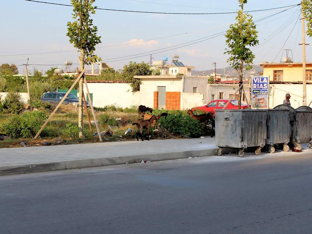 Ziegen in Vlora