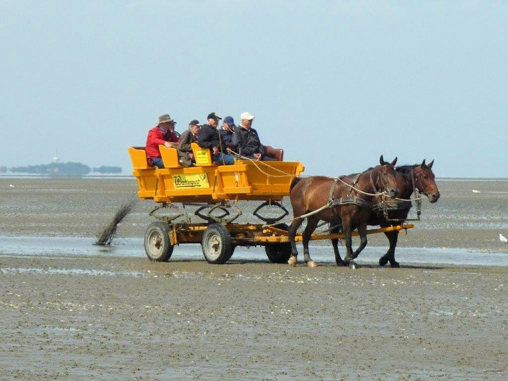 Duhnen - Wattwagen im Wattenmeer