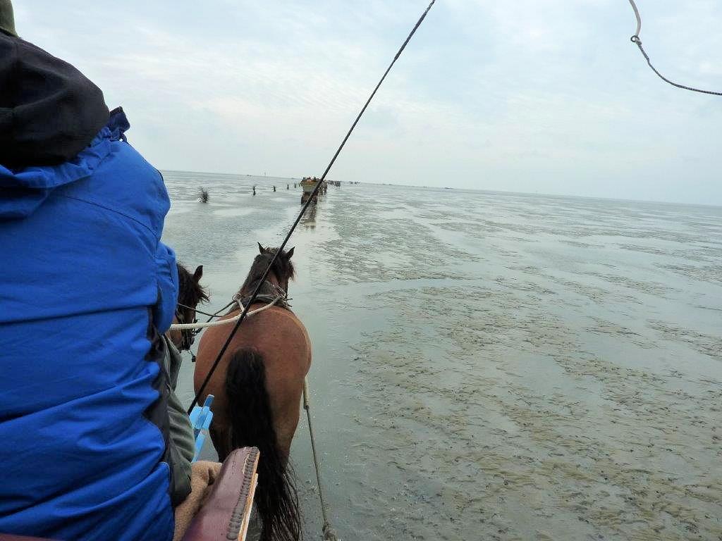 Duhnen - Mit dem Pferdefuhrwerk durch das Wattenmeer nach Neuwerk